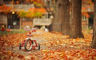 Tricycle in the Street wallpapers and stock photos
