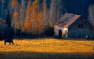 Farm in Autumn wallpapers and stock photos