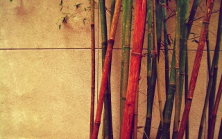 Colored Bamboo Sticks wallpapers and stock photos