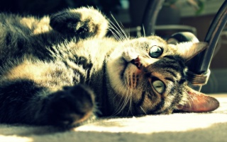 Cat Playing Under The Sun wallpapers and stock photos