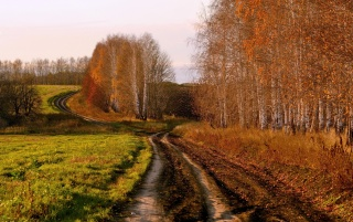 Country Road in Autumn wallpapers and stock photos