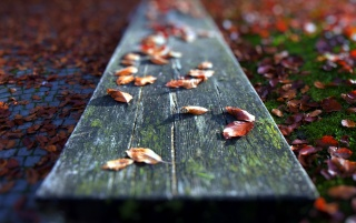 Fallen Leaves Close-up wallpapers and stock photos
