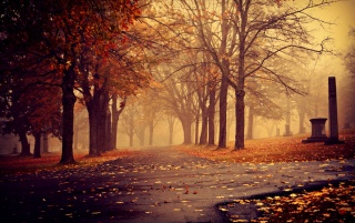 Park in Autumn wallpapers and stock photos