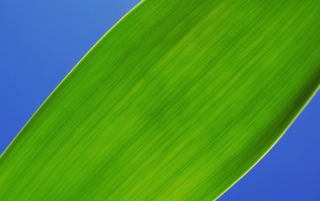 Green Leaf Macro Section wallpapers and stock photos