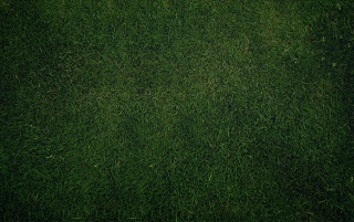 Green Grass Background wallpapers and stock photos