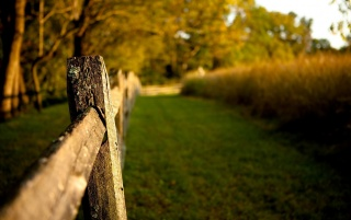 Fence Macro wallpapers and stock photos