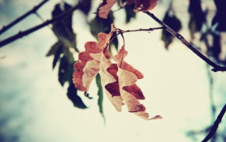 Previous: Autumn Leaf