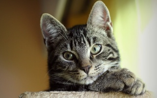 Cute Cat Close-up wallpapers and stock photos