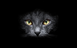 Random: Black Cat in the Dark