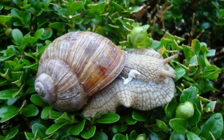 Snail wallpapers and stock photos