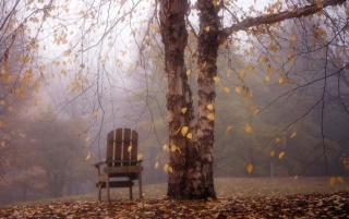 Autumn Leaves Falling over Chair wallpapers and stock photos