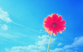Red Flower under the Blue Sky wallpapers and stock photos