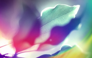 Multicolored Leaves wallpapers and stock photos