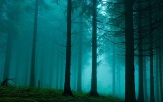 Foggy Forest wallpapers and stock photos