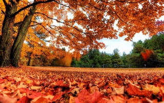 Autumn Feeling wallpapers and stock photos