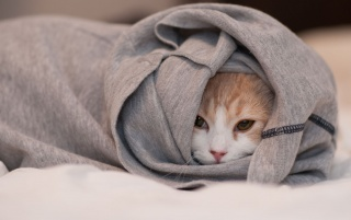 Cat Hiding in T-shirt wallpapers and stock photos