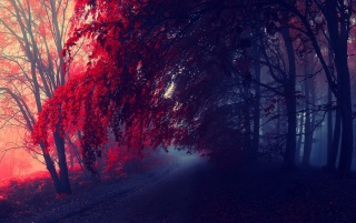 Random: Red Autumn