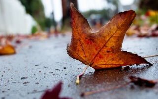 Autumn Leaf Macro wallpapers and stock photos