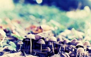 Forest Mushrooms wallpapers and stock photos