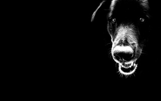 Random: Dog Close-up Black Tones