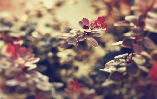Small Red Leaves wallpapers and stock photos