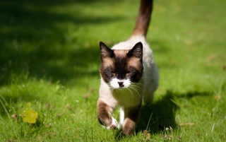 Raccoon Looking Cat In The Green Grass wallpapers and stock photos