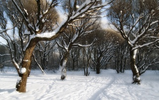 Snowy Forest wallpapers and stock photos