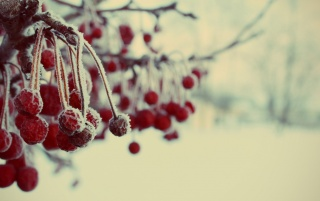 Frozen Berries wallpapers and stock photos
