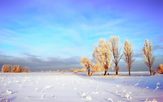 Snowy Winter Landscape wallpapers and stock photos