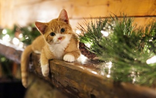 Christmas Kitten wallpapers and stock photos