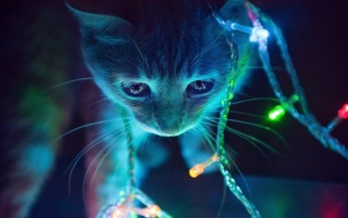 Christmas Lights Cat wallpapers and stock photos