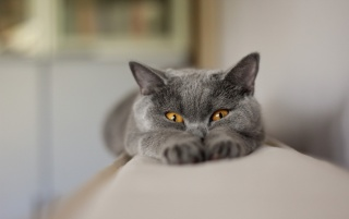 Gray Cat Stretching wallpapers and stock photos