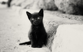 Lonely Black Kitten wallpapers and stock photos