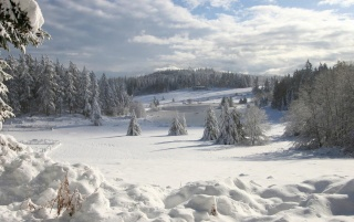 Previous: Fairytale Winter Scenery
