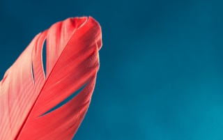 Red Feather wallpapers and stock photos