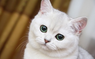 Random: Cute White Cat Close-up