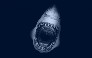 Great White Shark wallpapers and stock photos