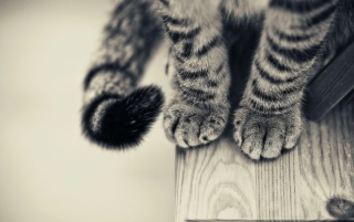 Cat Paws wallpapers and stock photos