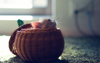 Cute Kitten in Basket wallpapers and stock photos