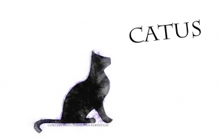 Catus wallpapers and stock photos