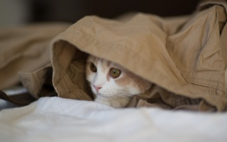 Undercover Cat wallpapers and stock photos