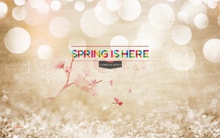 Spring Is Here! wallpapers and stock photos