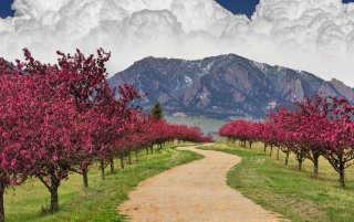 Colorado Spring Blossoms wallpapers and stock photos