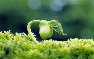 Spring Green Sprout wallpapers and stock photos