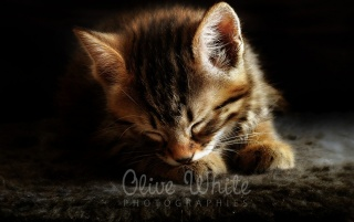 Corto le Chaton wallpapers and stock photos