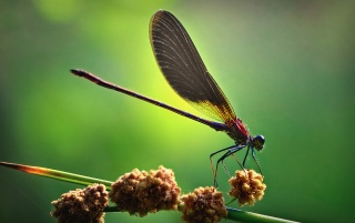 Dragonfly Macro wallpapers and stock photos