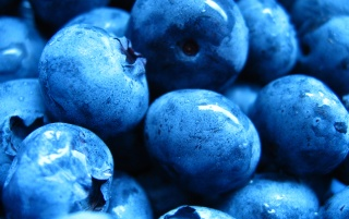 Blueberries Close-up wallpapers and stock photos