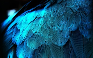 Eléctrica Plumas Azules wallpapers and stock photos