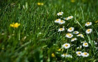 Spring Flowers and Grass wallpapers and stock photos
