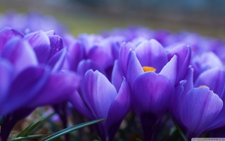 Spring Flowers Macro wallpapers and stock photos